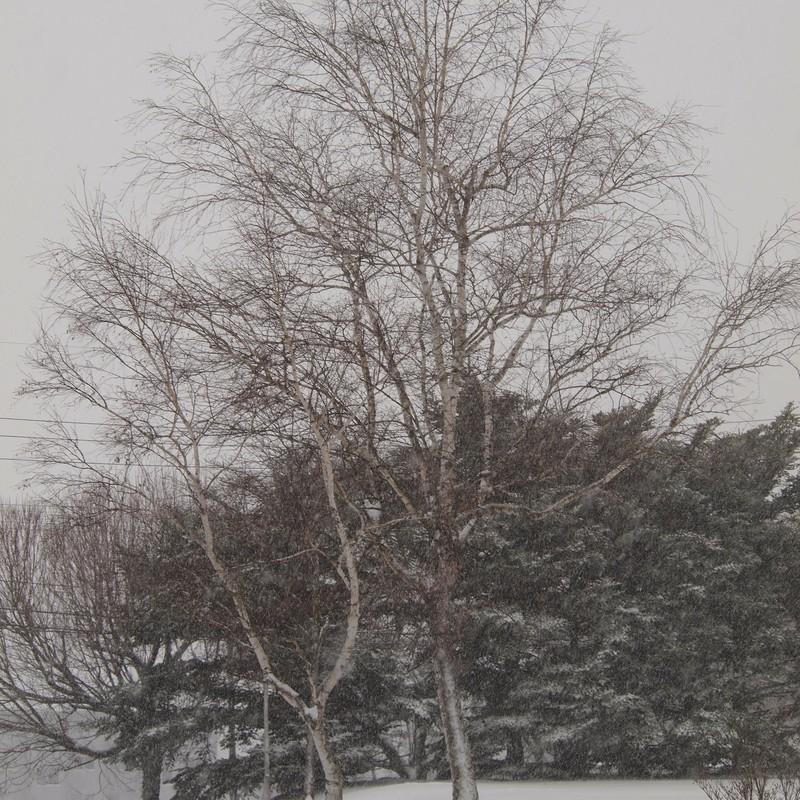 今日は1日中雪