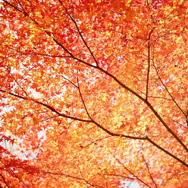 何千色紅葉