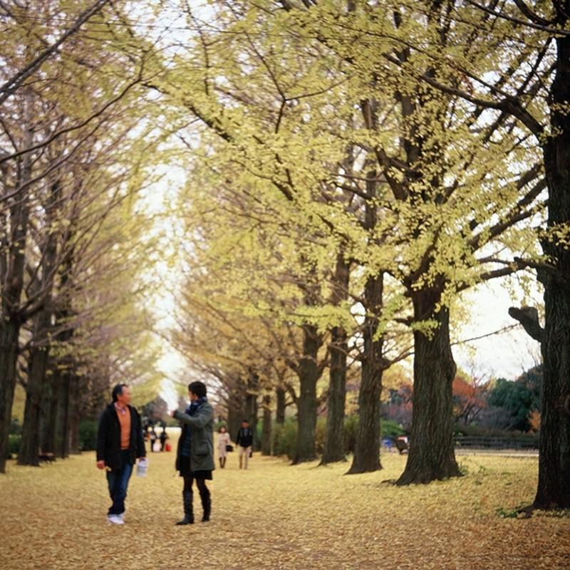 銀杏並木の夫婦