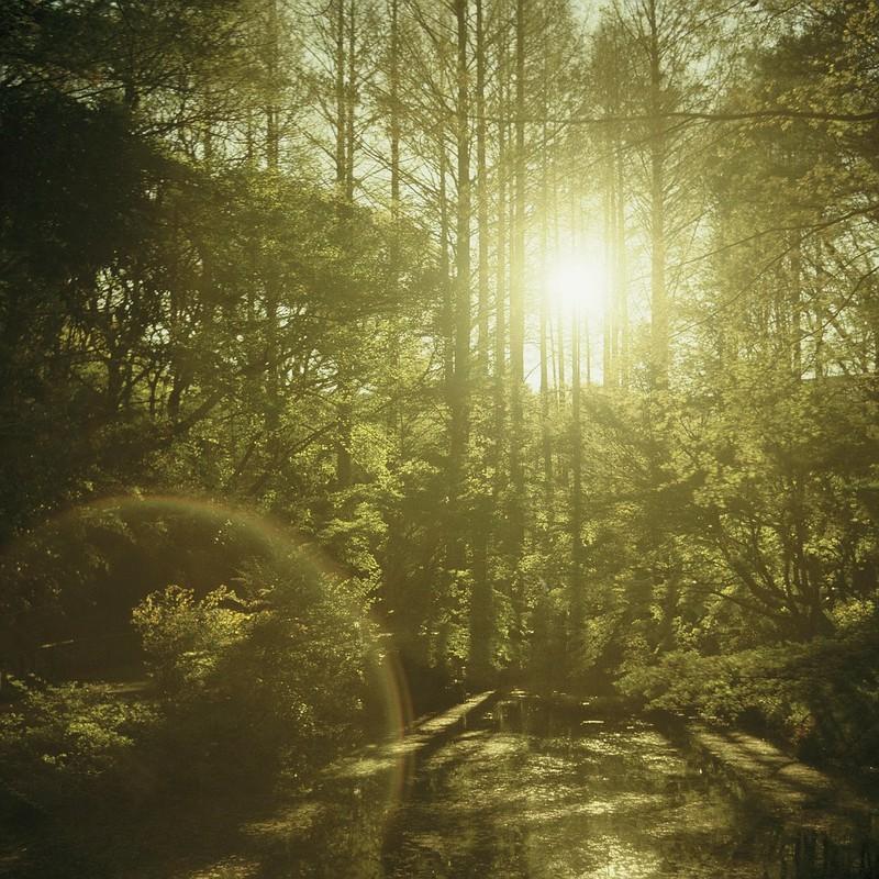 森の日射し