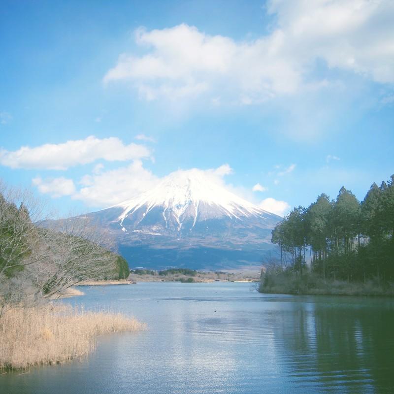 Mt.fuji & Tanuki Lake*