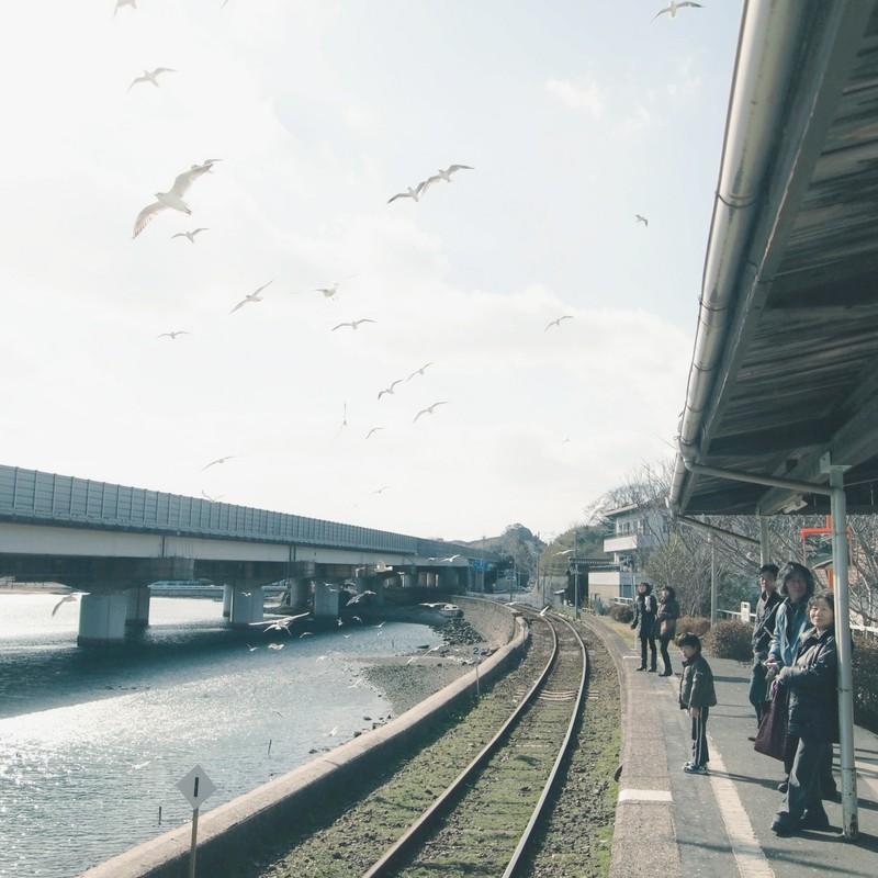 カモメが集まる駅