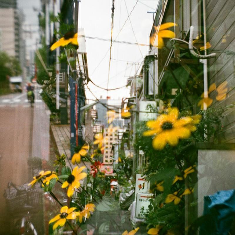 その花びら、梅雨空を彩る雨粒のように・・・(つまり失敗)