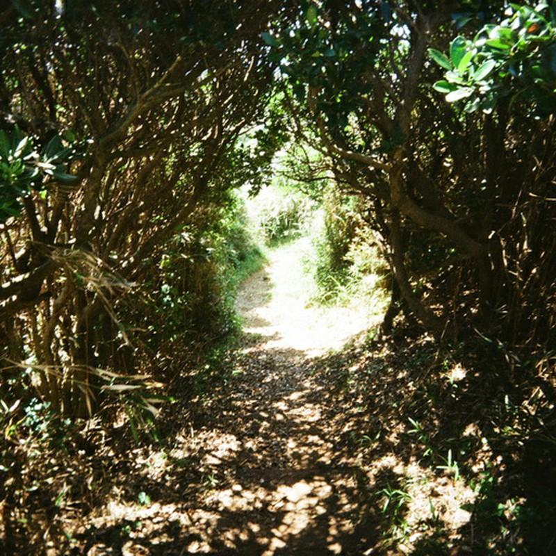 草のトンネル