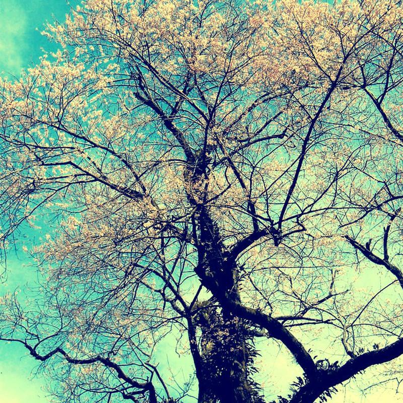 誰も知らなくても。それでも、花は咲く。
