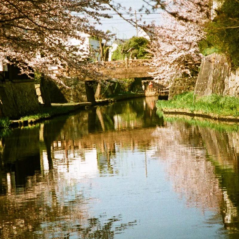 逆さ桜(110フイルムバージョン)