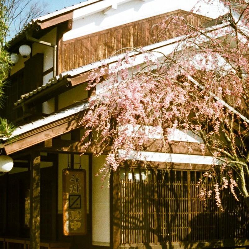 しだれ桜と茶店(110フイルムバージョン)