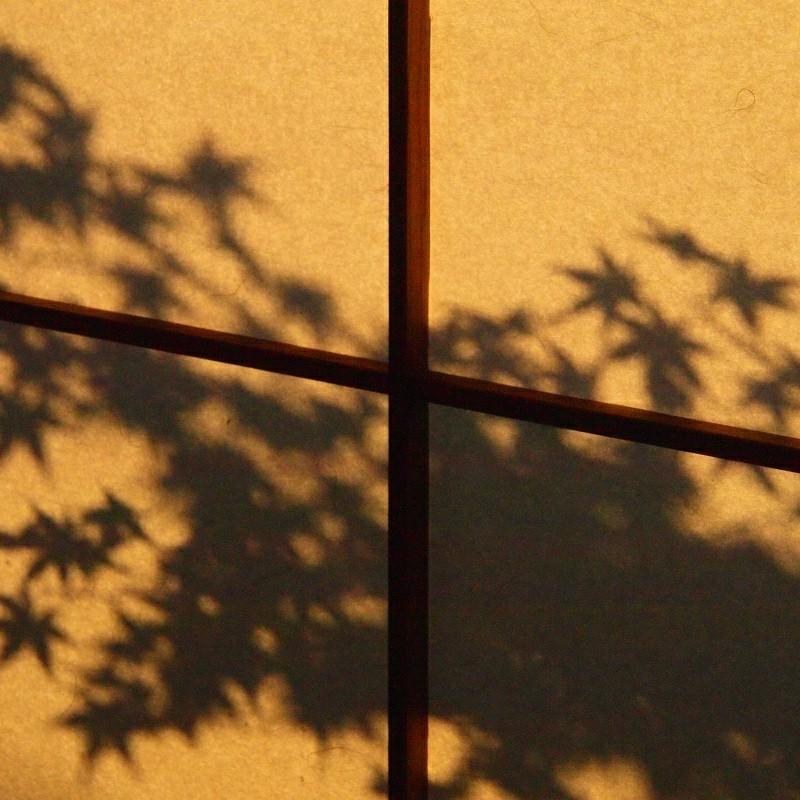 秋陽の影絵