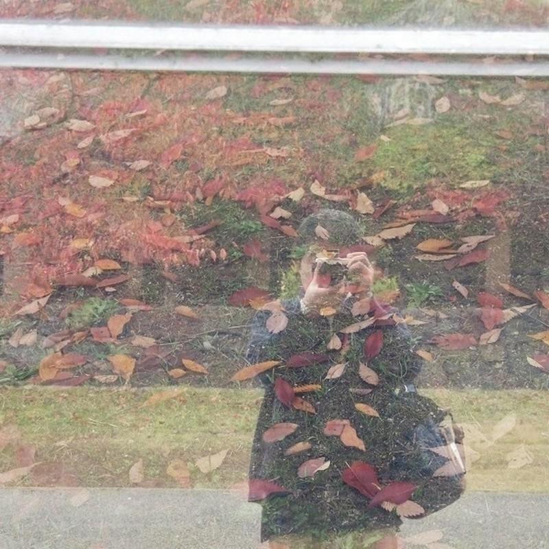 落葉のセルポ