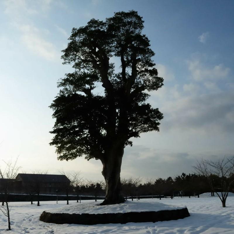 こころの樹 -冬-