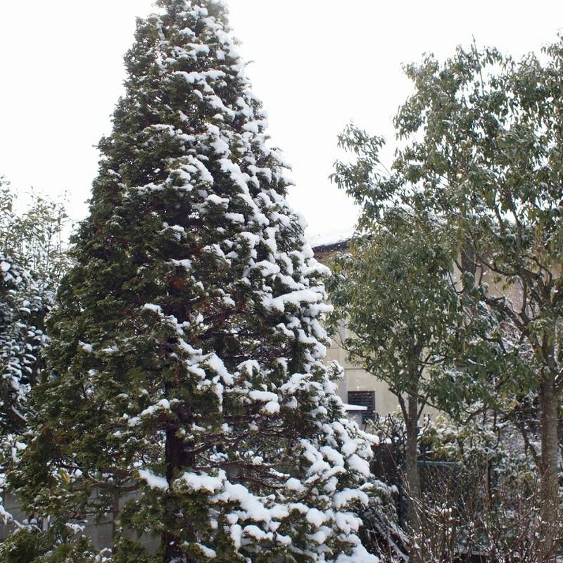 あの日も春の雪