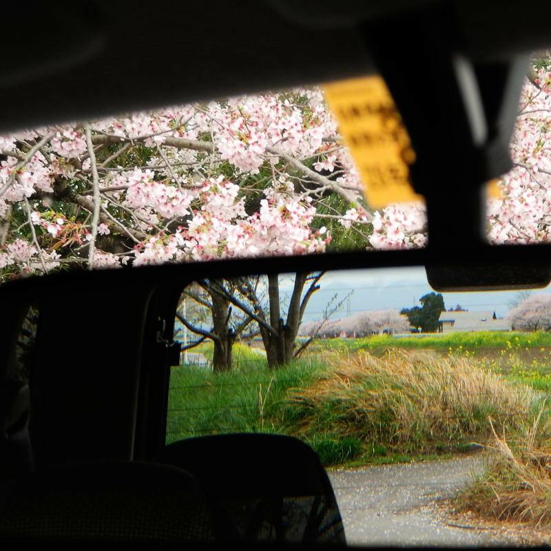 バックミラーの春