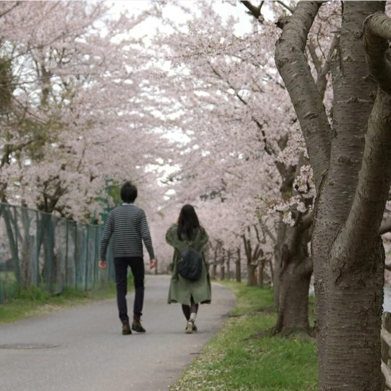 春色の並木