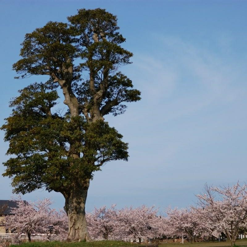 こころの樹ー春ー