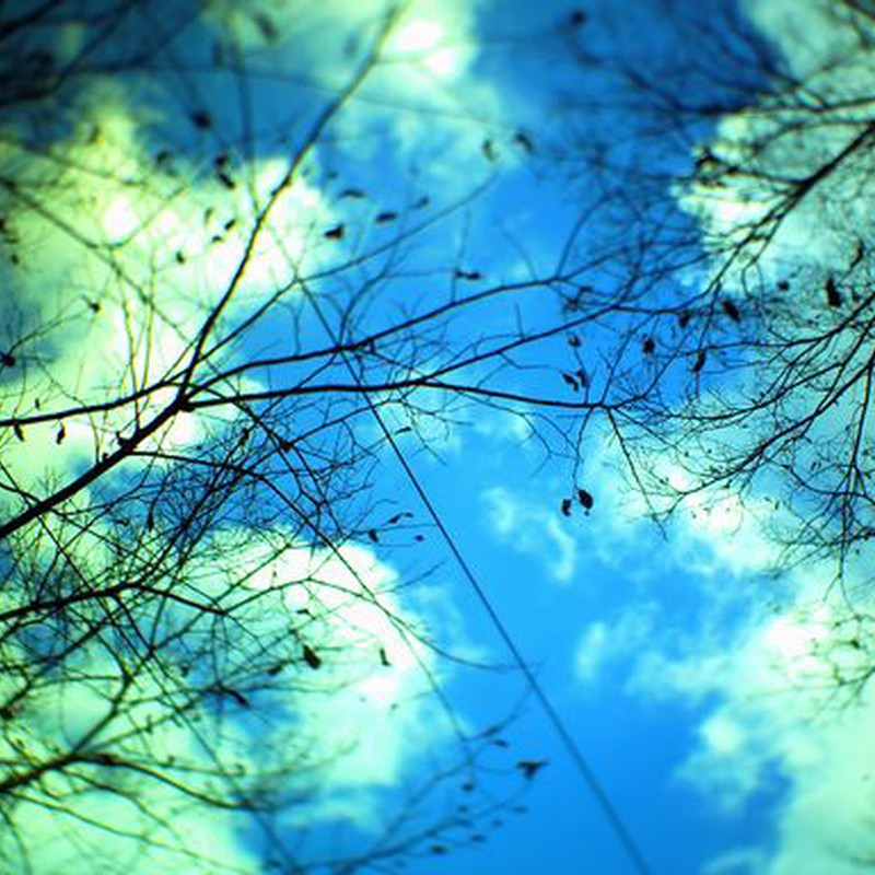 青空と枝先と電線と