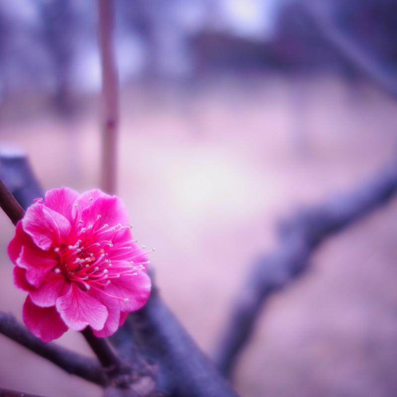 初春のワンマンショウ