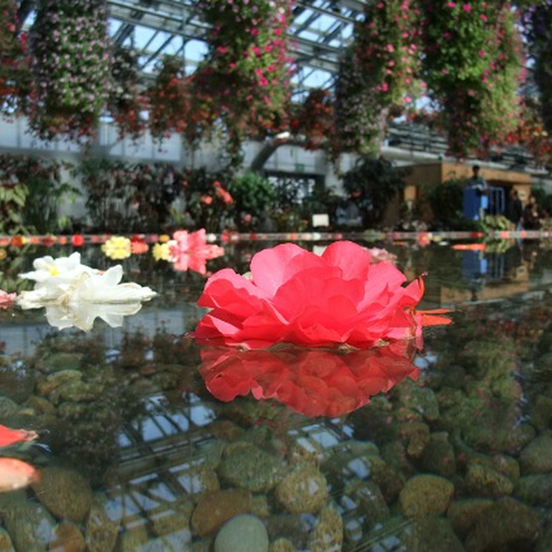 水に浮かぶ花 ①