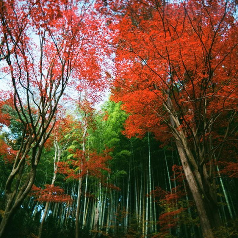竹と紅葉のコラボ☆