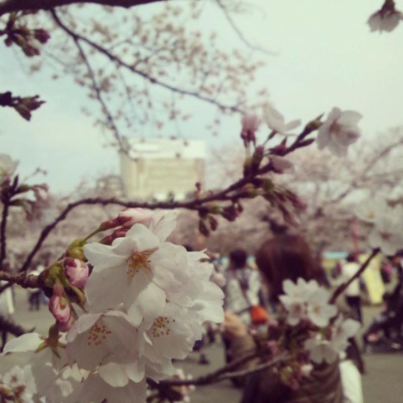 お花見ww