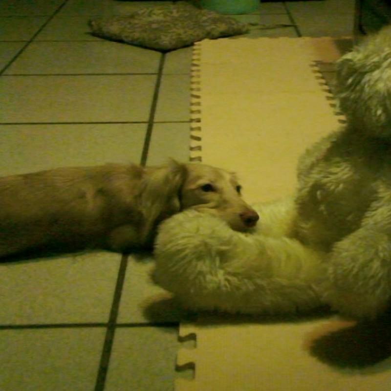 熊さんのひざまくら
