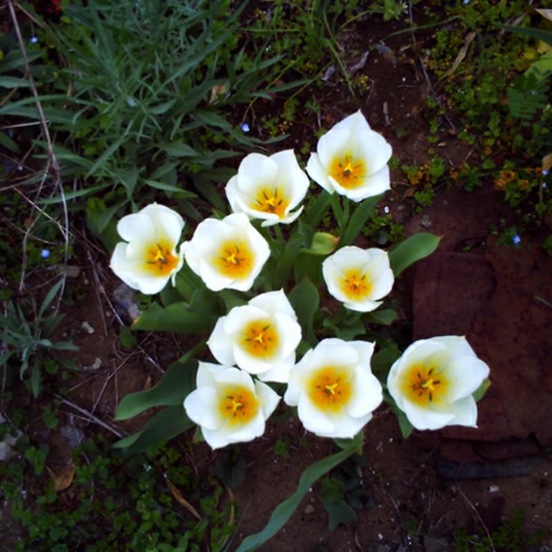 目玉焼き花