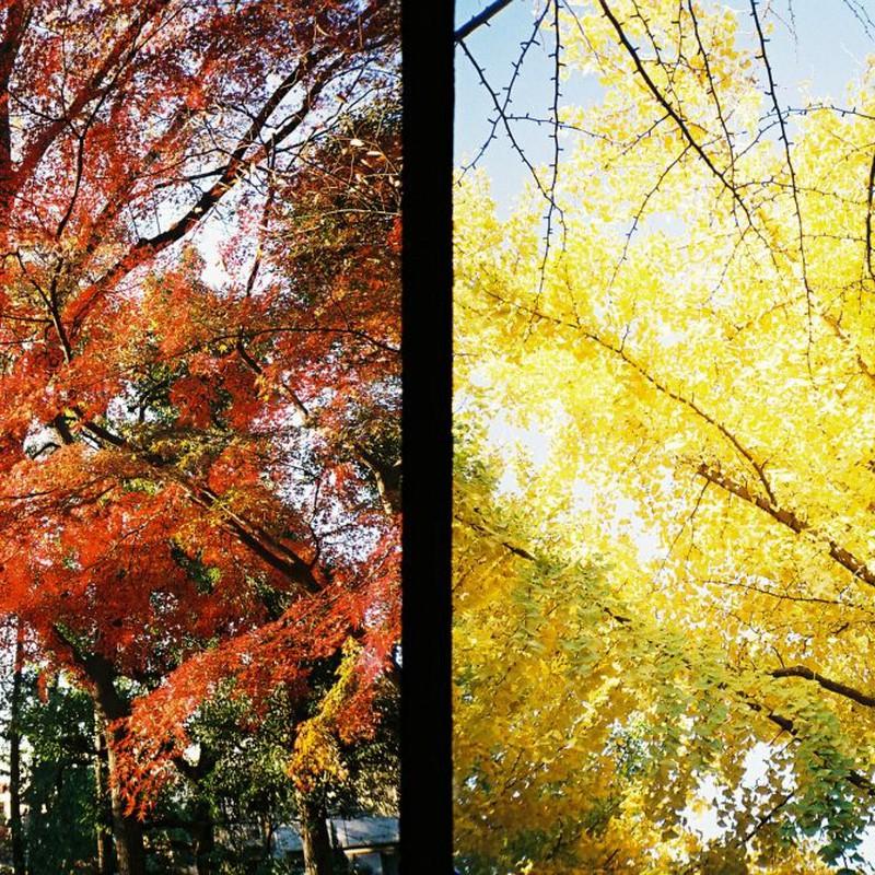 紅い秋、黄色い秋