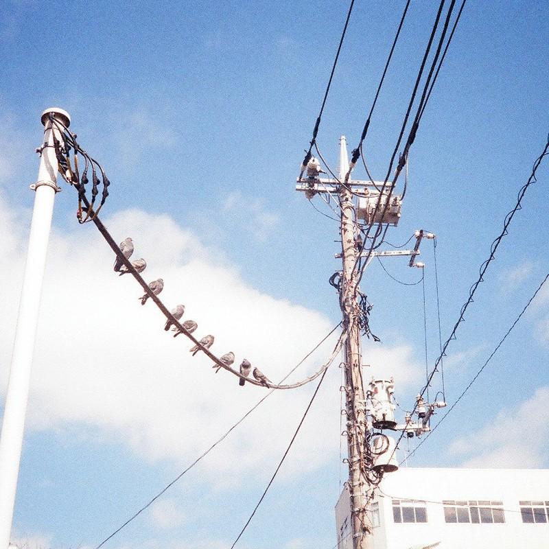 ハトの電線