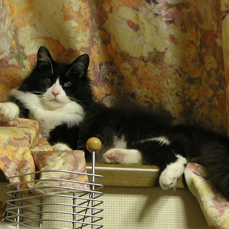 くー太郎という名の猫2