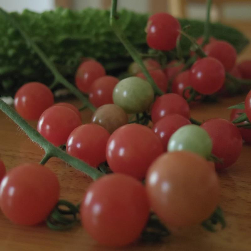 ミニトマト と ゴーヤ