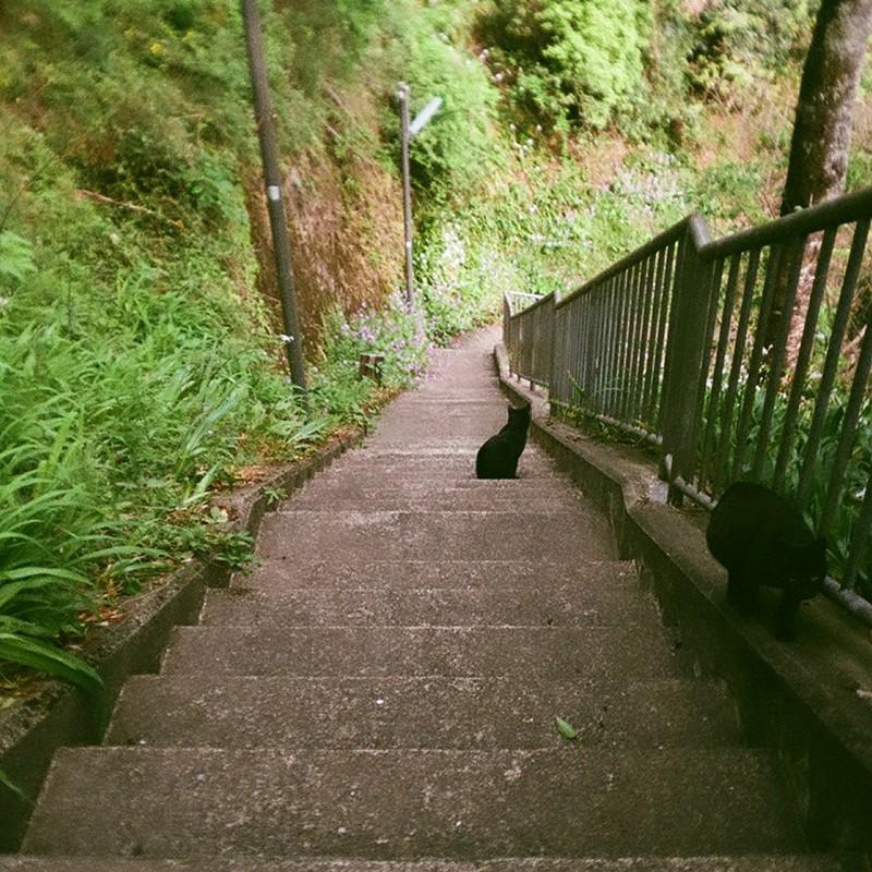 佇む黒猫 駆ける黒猫