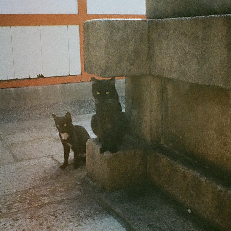 観る黒猫 覗く黒猫