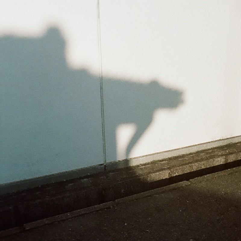 外壁の影犬