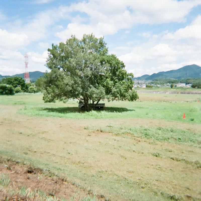 一瞬の夏 『草原の樹』