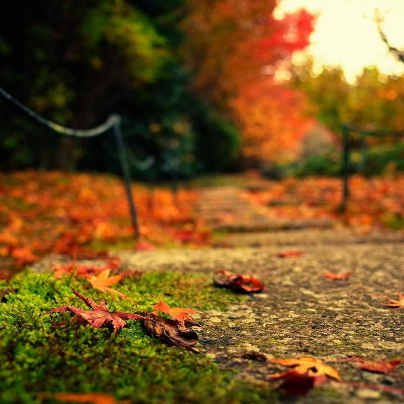 落葉と苔の湿度