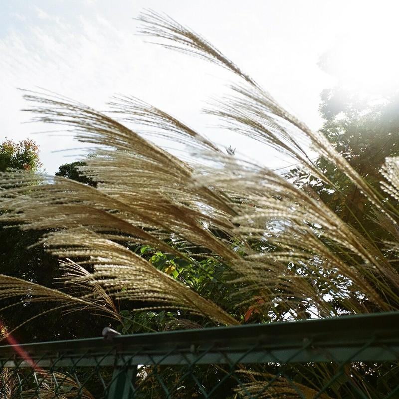 陽光と涼風