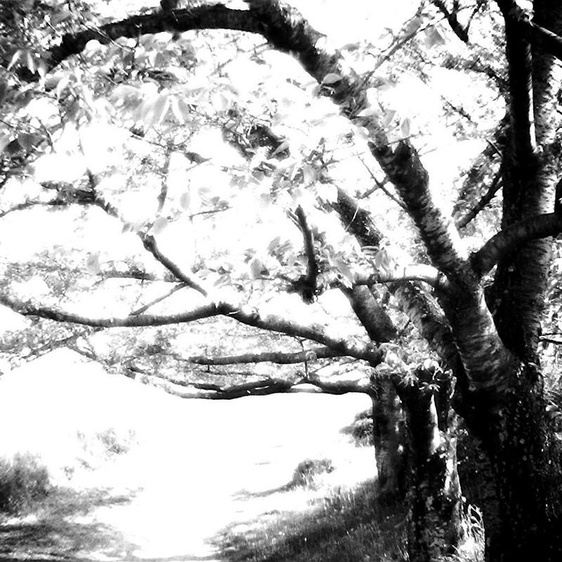葉桜の季節に