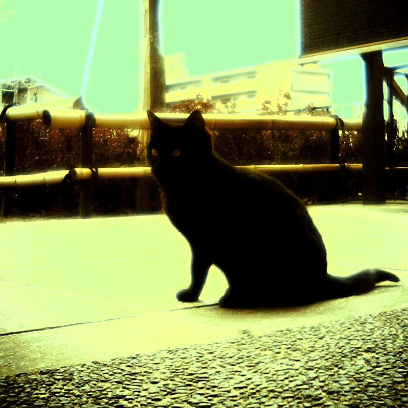 黒猫の三角