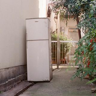 野良冷蔵庫
