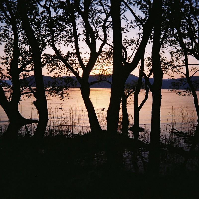 黄昏の木々