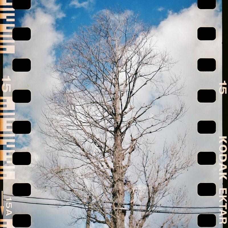 電線を抱える木