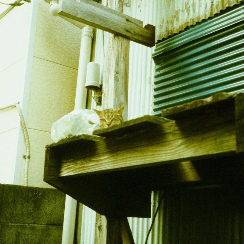猫よけの効果について