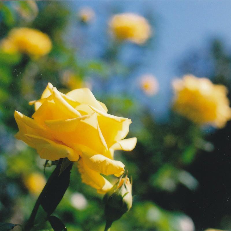 黄色いキミ
