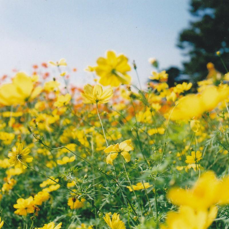 黄色で満たされる