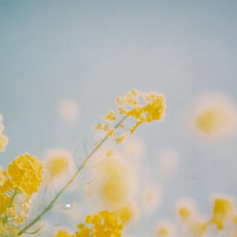 柔らかい黄色