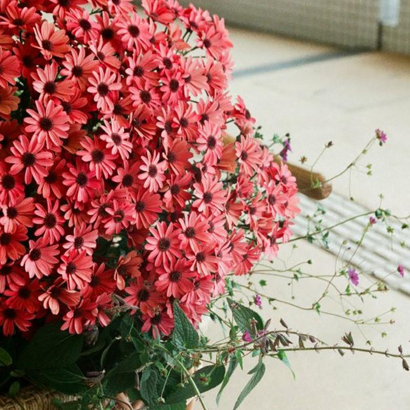 赤い花も好き