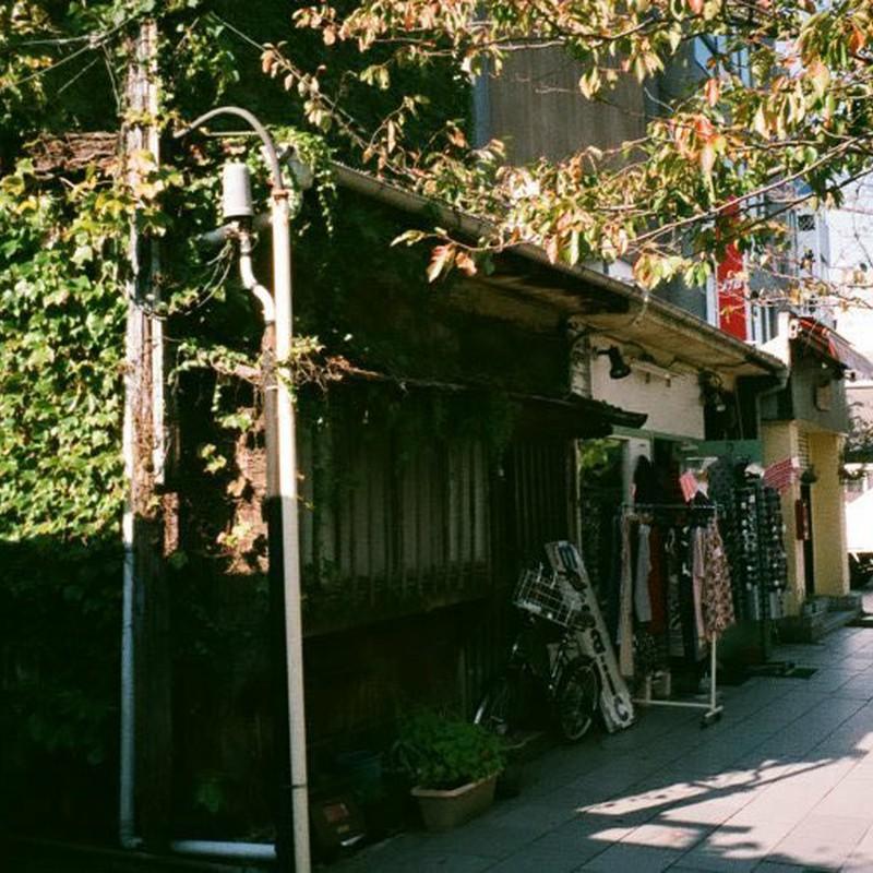 鎌倉でもツタ家