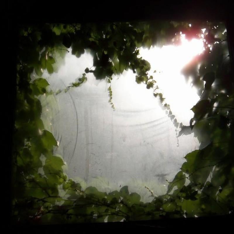 ツタ窓/内側