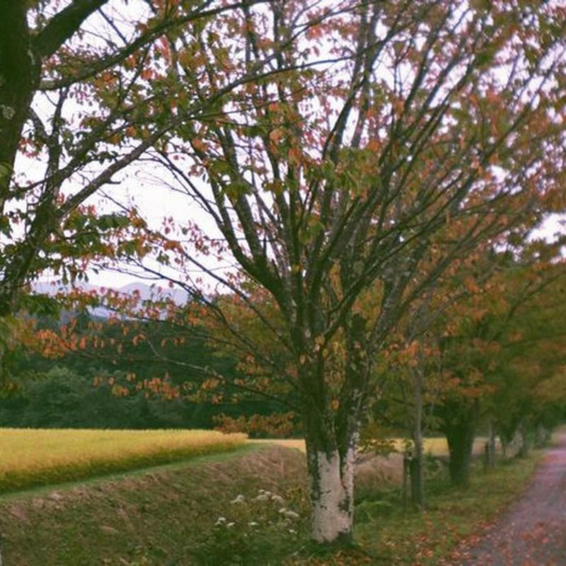 夏と冬の間に 秋をおきました