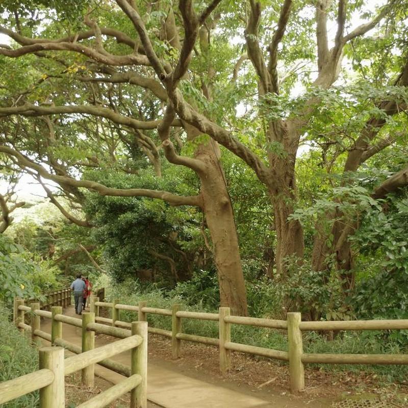原生林の島