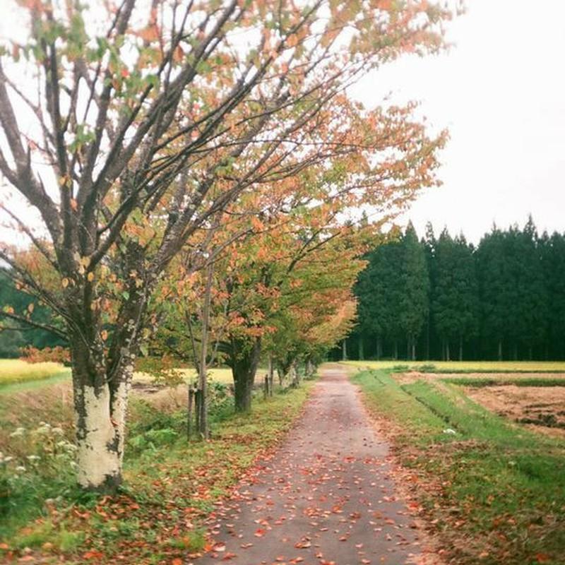 ゴールデンハーフの秋